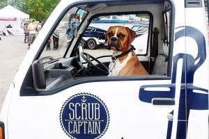 Scrub Captain and Nacho Cilantro boxer pup
